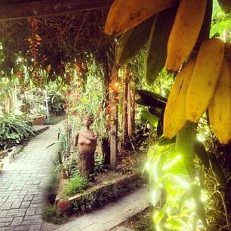 Pousada Tropicana : Garden