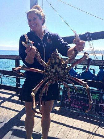 Santa Barbara Shellfish Company: Spider crab
