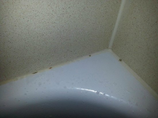 Country Inn & Suites By Carlson, Cedar Rapids North: Moldy shower