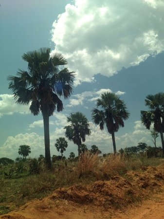 Murchison Falls National Park: Palms brought from Sudan via elephant