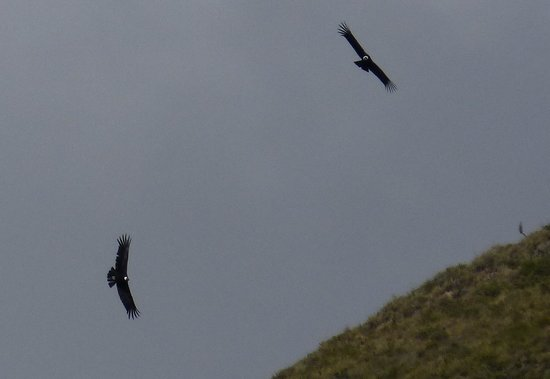 Natura Vive: Cóndores al desayuno (Skylodge)