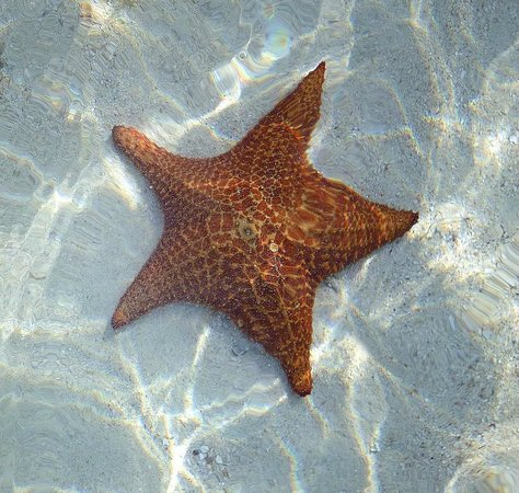 Franklin's: starfish
