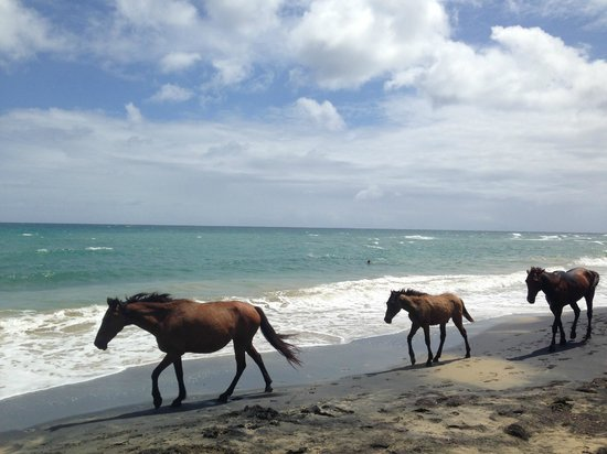 Wild horses on black sand beach - a short hike originating from Oreanda