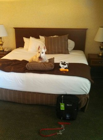 Hotel RL by Red Lion Spokane at the Park: I know l know get of the bed