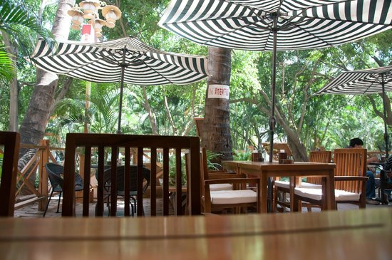 MeiMei Café : Here is vie from cafe toward street with falling coconut warning
