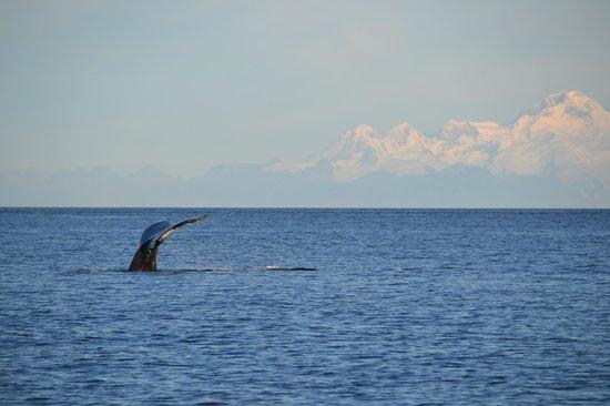 Twin Creeks Trailhead Lodge & Retreat: Whale tail and Iliamna