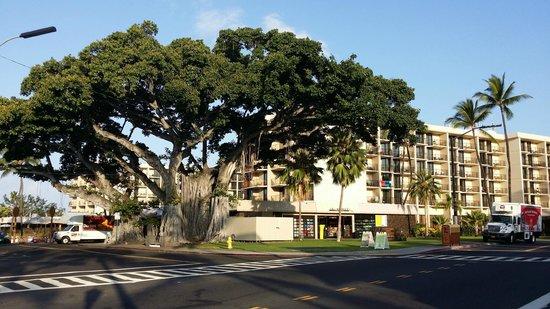 Courtyard by Marriott King Kamehameha's Kona Beach Hotel: CourtYard2