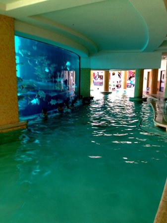 Water Slide Through Shark Tank Picture Of Golden Nugget Hotel Las Vegas Tripadvisor