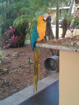 Hampton Inn Key Largo: Mango