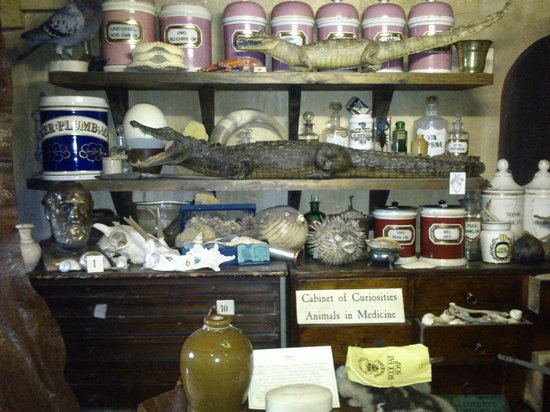 Old Operating Theatre: Cabinet of Curiosities