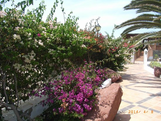 Gran Castillo Tagoro Family & Fun Playa Blanca: site is well maintained andhas nany beautiful shrubs