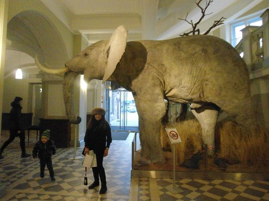 Museo de Historia Natural: Entrance inside of the museum
