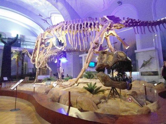 Museo de Historia Natural: T-Rex head