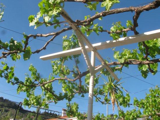 Hotel Sirince Evleri: Grape trellis over the terrace