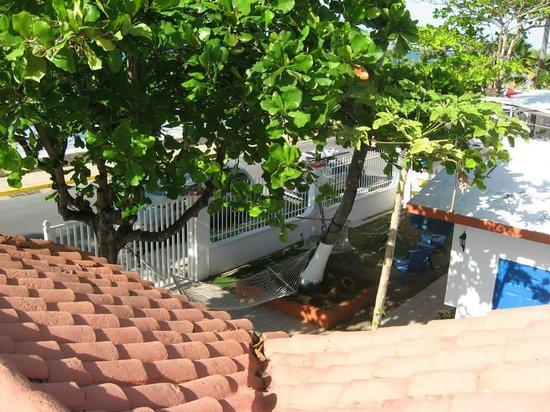 Tres Palmas Inn: Hammocks