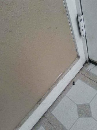 Knights Inn Indianapolis Airport South : filthy black baseboards