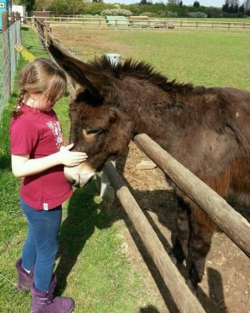 Hopefield Animal Sanctuary: making friends at Hopefield