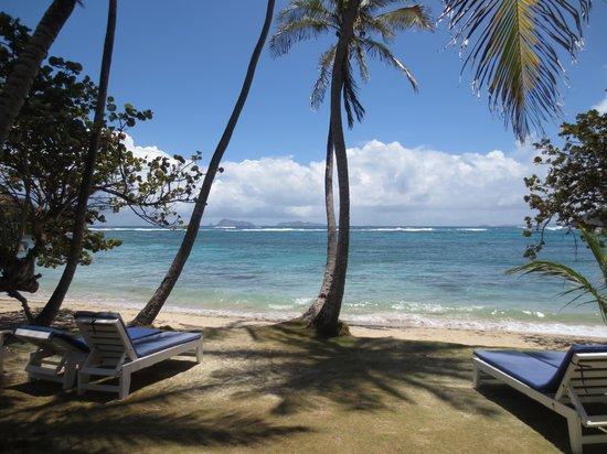 Sugar Reef Cafe : Islands