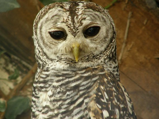 Small Breeds Farm Park and Owl Centre: Wise owl