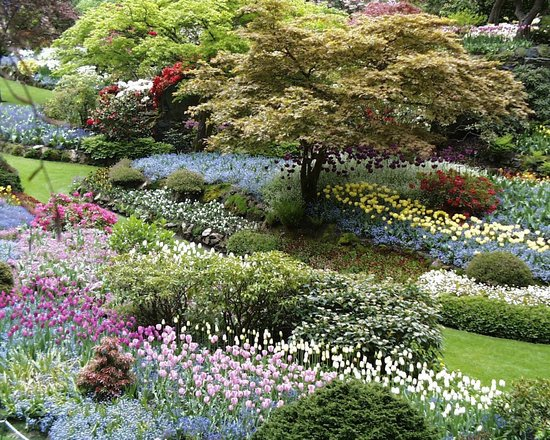 The Butchart Gardens: A carpet of color