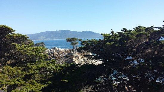 Seventeen Mile Drive: Lone Cypress