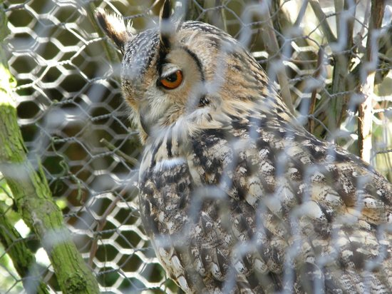 Small Breeds Farm Park and Owl Centre: Eagle owl not pleased with people too near his nest!