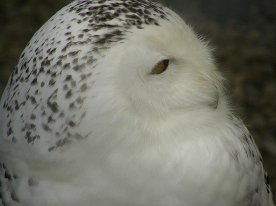Small Breeds Farm Park and Owl Centre: Stunning bird