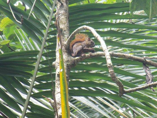 Cahuita National Park: Ardilla comiendo