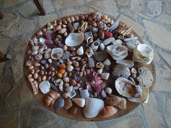 Los Cardones EcoLodge: Good for shells