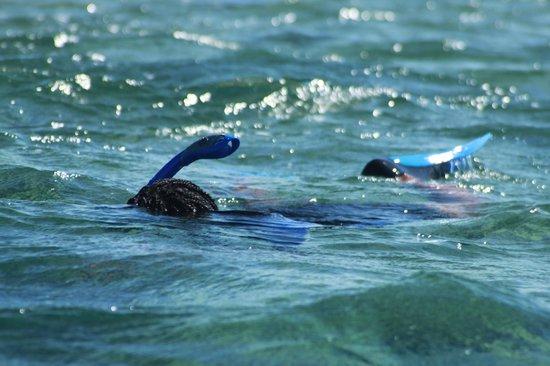 Paradise Cove Beach Resort : Snorkeling