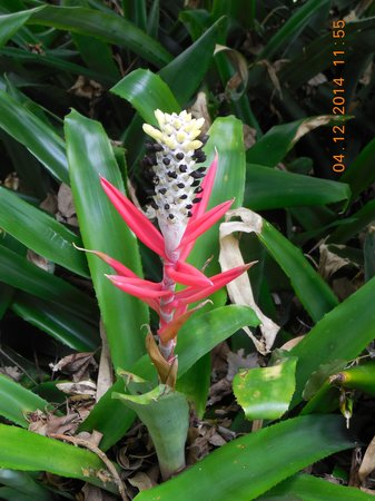 Marie Selby Botanical Gardens: Selby Gardens