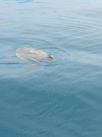 Hotel Kaveka : Rencontre avec une tortue dans le lag ô n fu kaveka