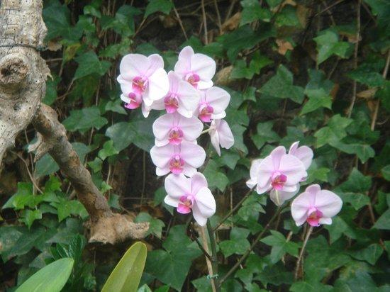 Loro Parque: jardín de orquídeas