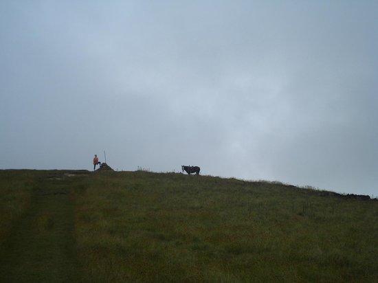 Maunga Terevaka : En la cima del monte Terevaka