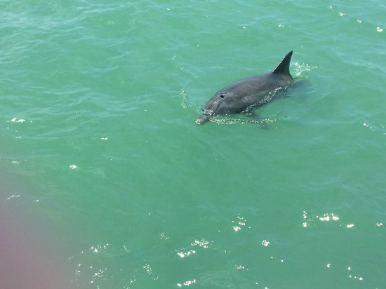 Adventure Cruises Inc.: Dolphin we saw on the cruise