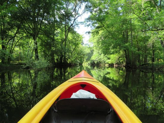 Canoe Escape: So green and calm