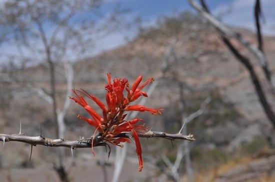 Hacienda Del Sol: Nearby Canyon