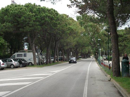 Avenida Beira-mar do Lido, bastante arborizado