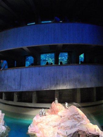 New England Aquarium : grand bassin