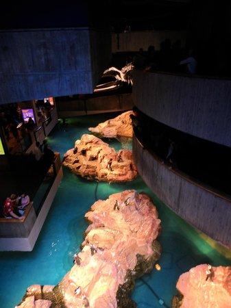 New England Aquarium : Pingouins