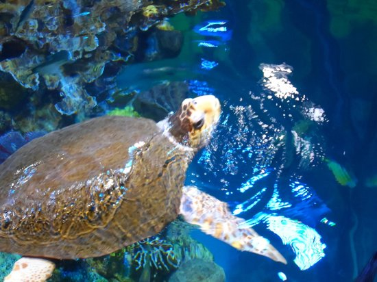 Tortue Picture Of New England Aquarium Boston Tripadvisor