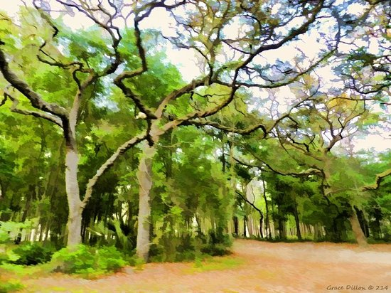 Ocala National Forest: Oaks at the Campsite