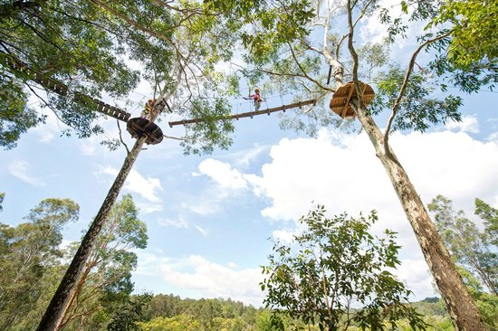 TreeTop Adventure Park: Newcastle