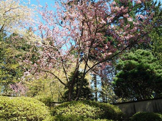 Portland Japanese Garden: flowering tree