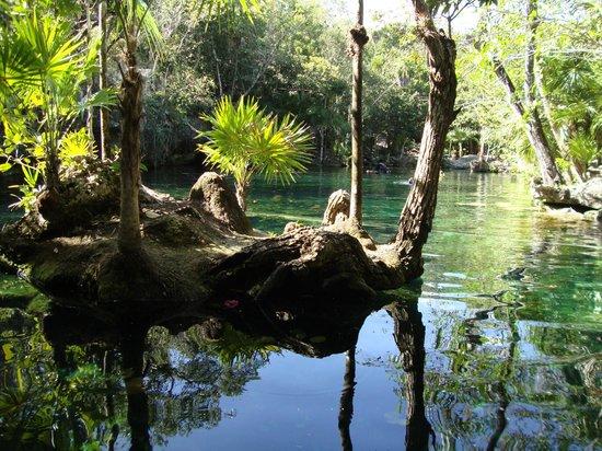 Cenote Chikin Ha: swimming cenote