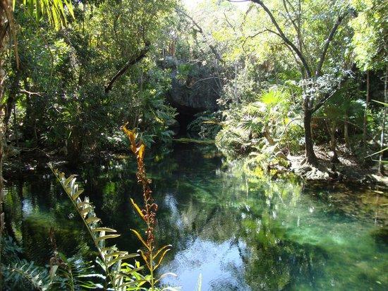 Cenote Chikin Ha: Lush jungle beauty of one of the three cenotes at Chikin Ha