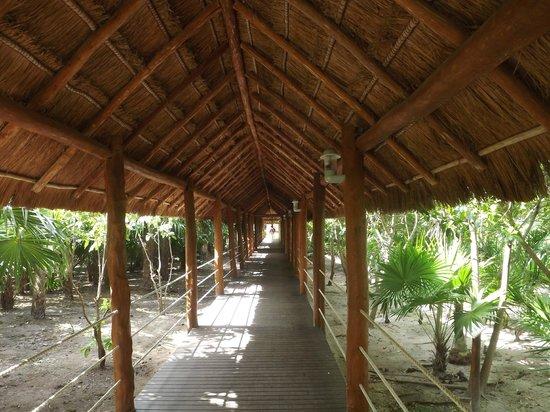 Ocean Coral & Turquesa : Covered walkway from our building to resort