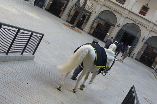 Spanische Hofreitschule: Taking horse back to the stables