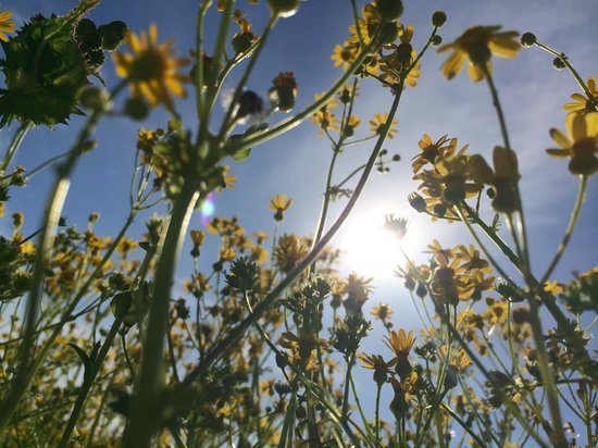 BlissWood Bed and Breakfast Ranch: Sunshine Flowers