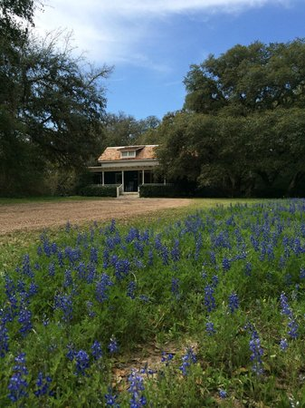 BlissWood Bed and Breakfast Ranch: Cottage flanked by Bluebonnets